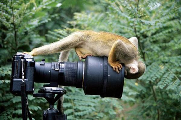 Невероятни снимки на животни на дивата природа от близо