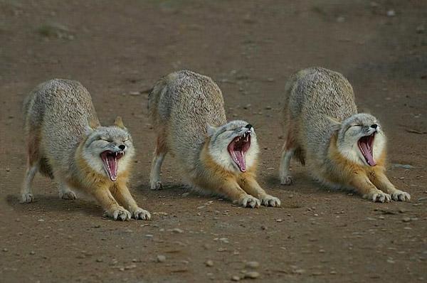 Невероятни фотографии на животни от дивата природа - Животни в синхрон