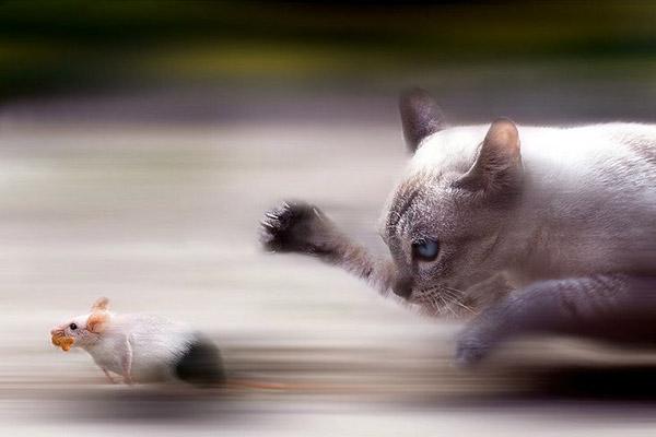 Невероятни фотографии на животни от дивата природа - преследване на плячка