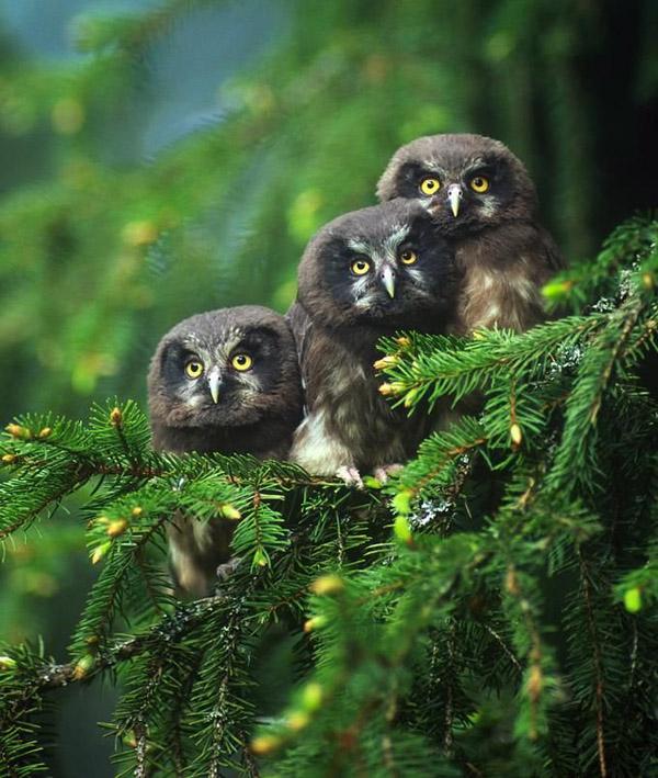 Невероятни снимки на животни от дивата природа - зашеметяващият поглед на совите в гората