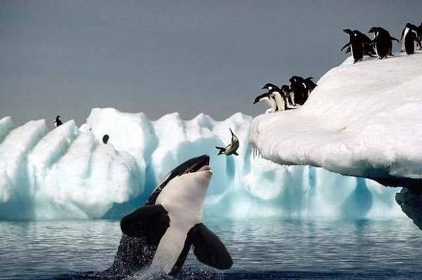 Невероятни снимки на животни от дивата природа - подходящо за реклама на ресторант за барзо хранене.