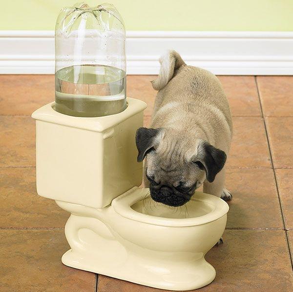 Джаджа за лесно дозиране на вода за кучета