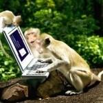 маймунско а