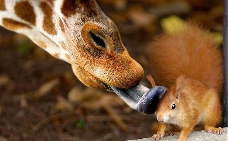 Невероятни фотографии на животни в дивата природа